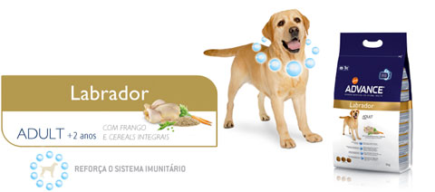 advance-labrador-info