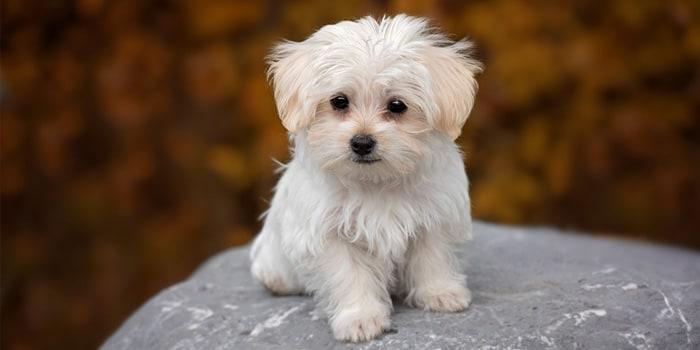 Cachorro Puppy