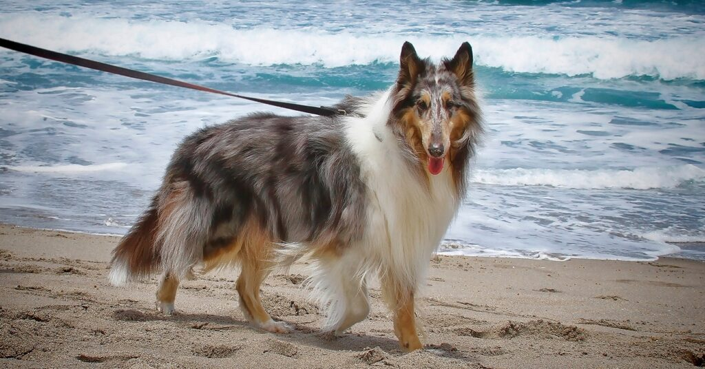 Praias para cães em Portugal