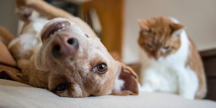 Chip cão e gato