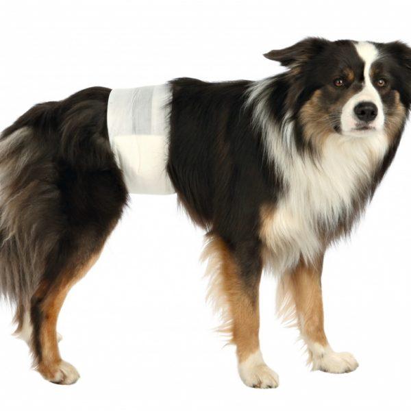 Fraldas para Cães Machos-8657
