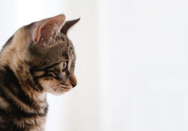 gato-golpe-de-calor-1