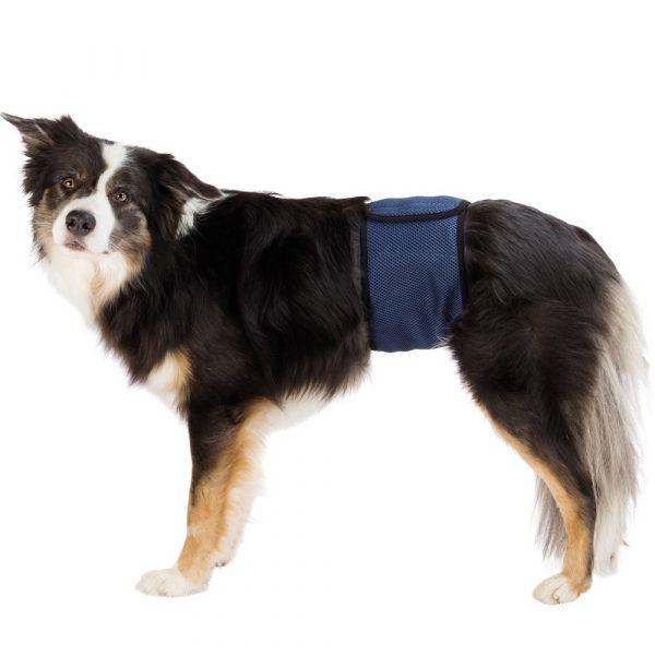 Banda para cães machos incontinentes -0